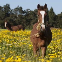 cheval pas cher